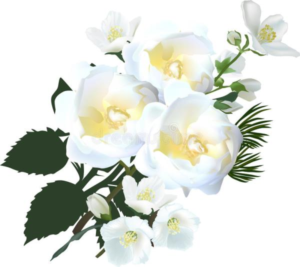 Bunch Of White Jasmine And Rose Flowers Stock Vector