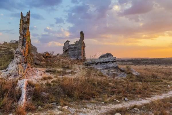 bush desert landscape with rock