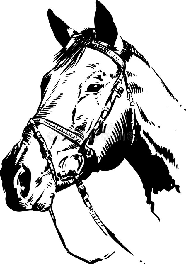 Cabeça de cavalo ilustração do vetor. Ilustração de logo