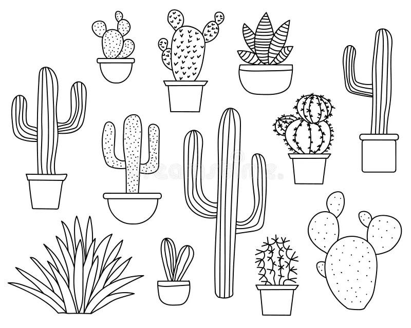 Succulent Line Art stock illustration. Illustration of