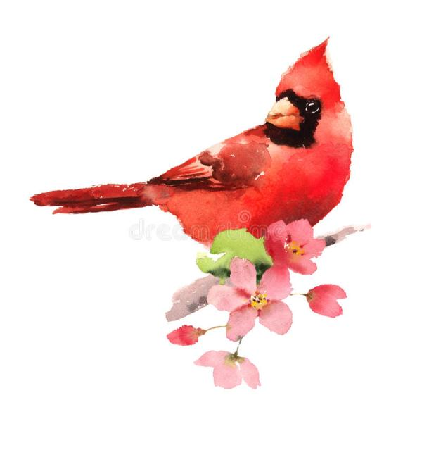cardinal red bird cherry