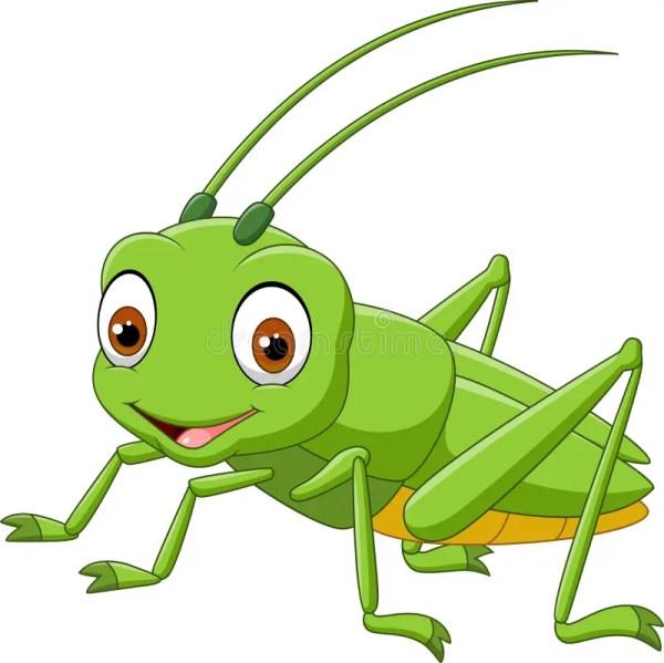 cartoon grasshopper isolated