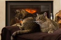 Cats In Front Of Fireplace stock photo. Image of resting ...