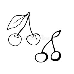 cherry leaf stem doodle vector isolated outline drawn hand transparent icon cartoon greeting beauty emblems patches posters prints cards clothes