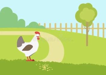 habitat farm cartoon chicken hen background animals vector birds flat clipart nature illustration dreamstime animal zoo