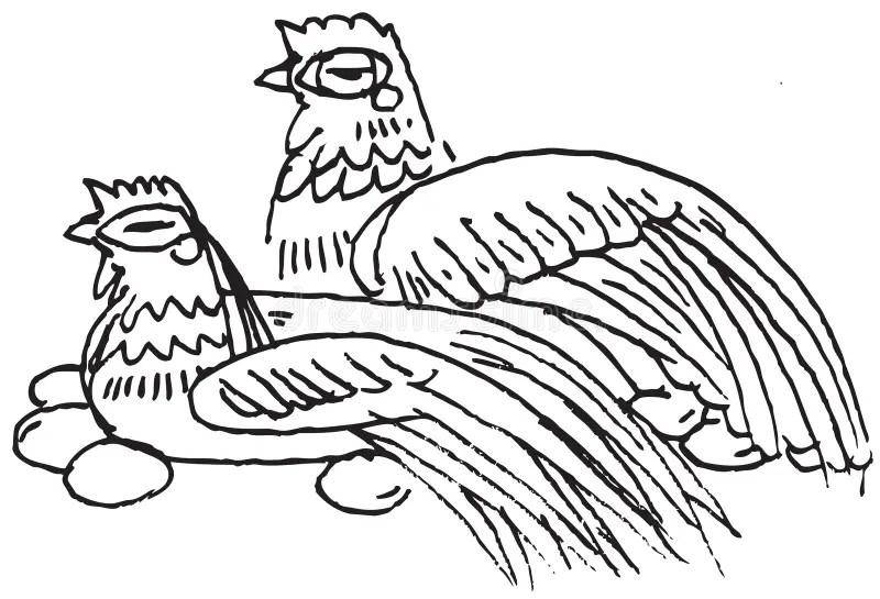 Chicken lay eggs stock vector. Image of care, farm, comic