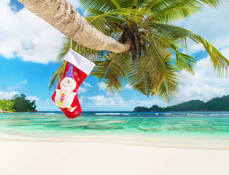 Christmas Sock On Palm Tree At Exotic Tropical Beach Stock