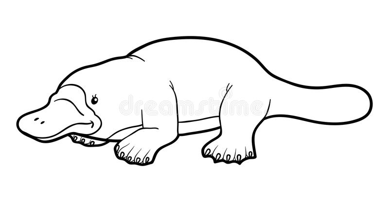 Coloring Book For Children: Platypus Stock Vector
