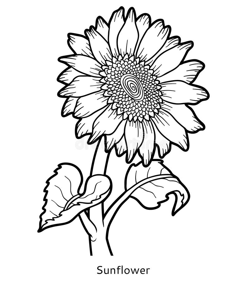 Coloring Book, Flower Sunflower Stock Vector