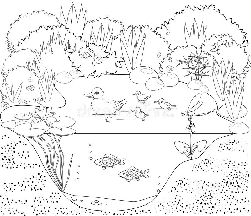 Coloring duck pond stock vector. Illustration of colour