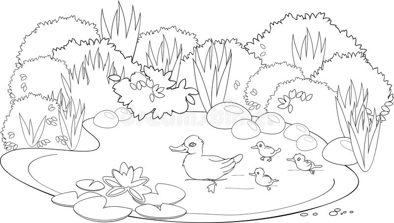 Coloring duck pond stock vector. Illustration of aquatic
