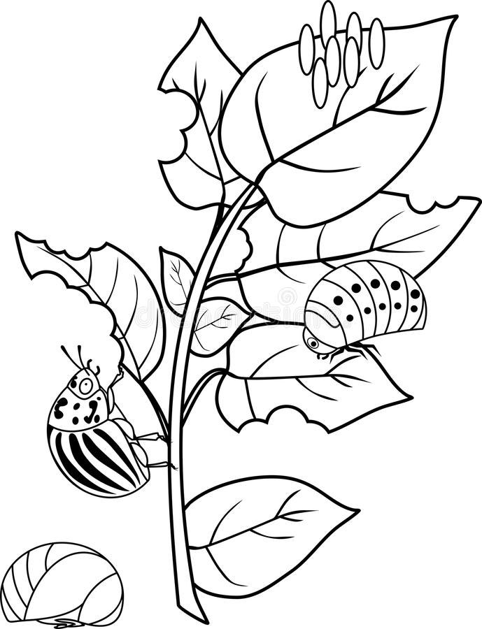 Coloring Page With Life Cycle Of Fish. Sequence Of Stages
