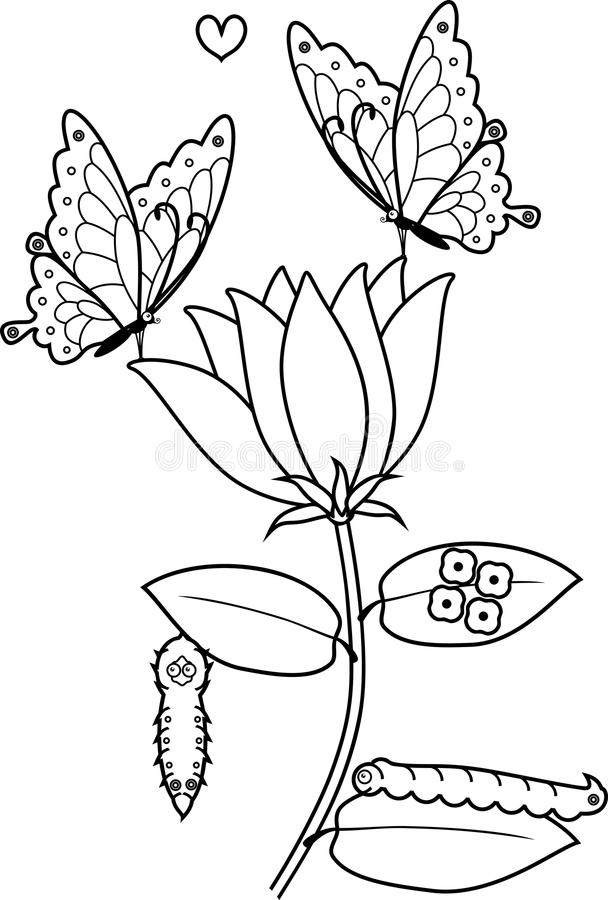Coloring Page. Parts Of Plant. Morphology Of Flowering