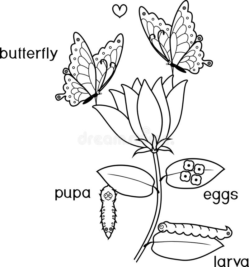 Flower Life Cycle Stock Illustrations