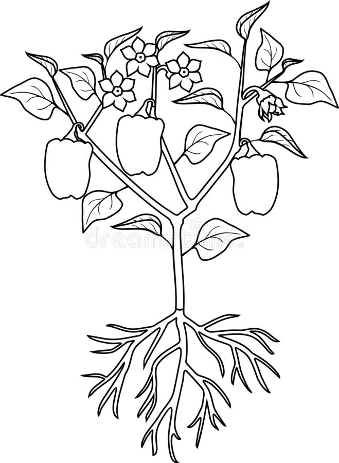 Coloring Page. Instructions On How To Plant Flower In Six
