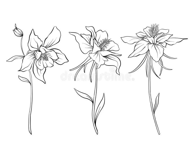 Columbine Flowers. Set Of Outline Flowers. Stock Vector