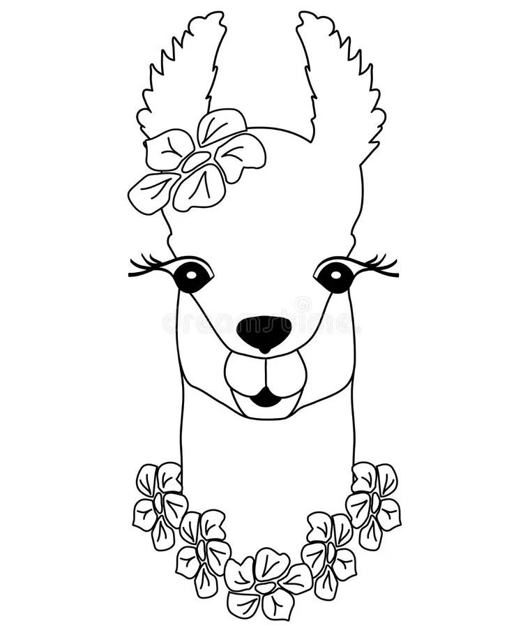 Isolated Outline Cartoon Baby Llama. Stock Vector
