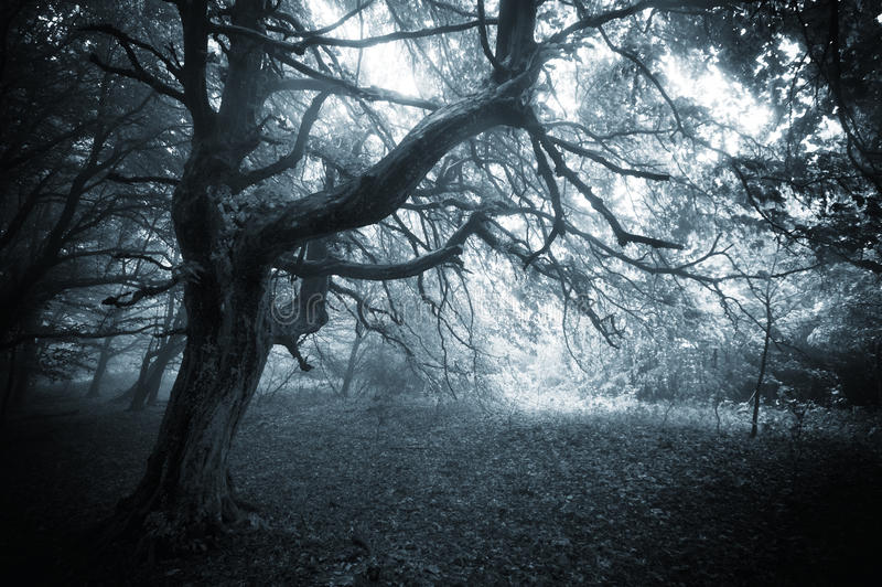 Gloomy Fall Wallpaper Dark Forest With Twisted Mysterious Tree And Fog Stock