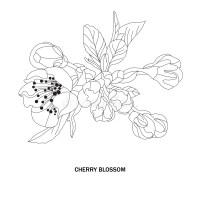 Dekorative Kirschblüte Stock Illustrationen, Vektors ...