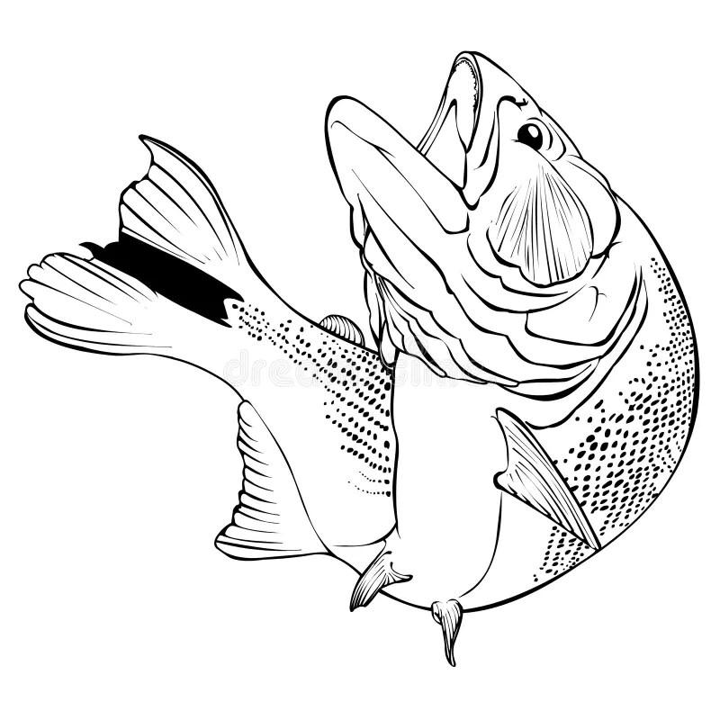 Dorado Fish Vector Illlustration Stock Vector