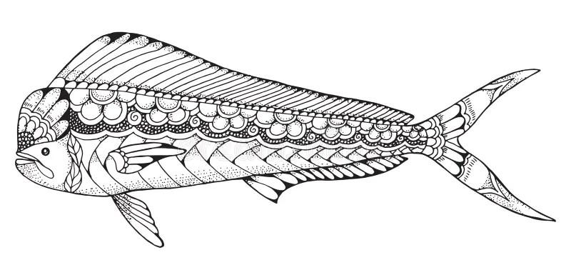 Dorado Mahi Mahi Fish Zentangle And Stippled Stylized
