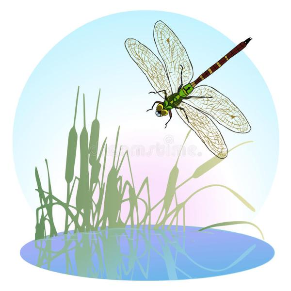 dragonfly flying over pond overgrown