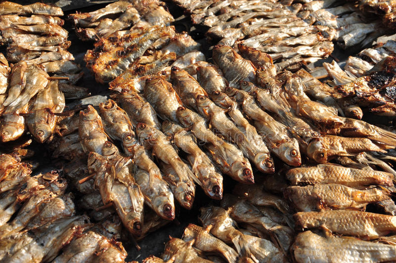 Fresh Red Rock Fish Stock Photos - Download 1042 Royalty ...