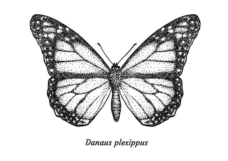 Elemento Realista De Plexippus Del Danaus Ejemplo Del