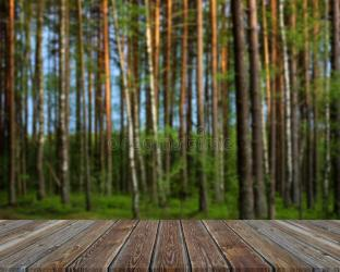 22 333 Blurry Forest Background Photos Free & Royalty Free Stock Photos from Dreamstime