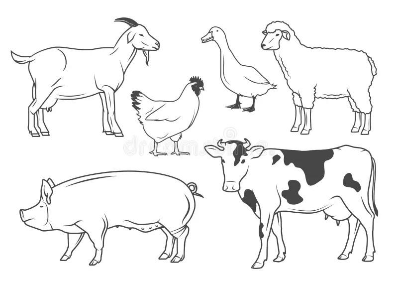 Farm animals stock vector. Illustration of nature