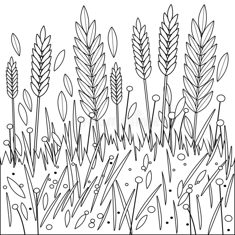 Field Of Wheat, Barley Or Rye. Black And White Coloring