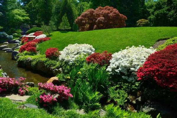 flowering azaleas bordering pond