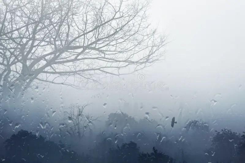 Rainy Fall Day Wallpaper Foggy Rainy Fall Day Stock Photo Image Of Misty Grey