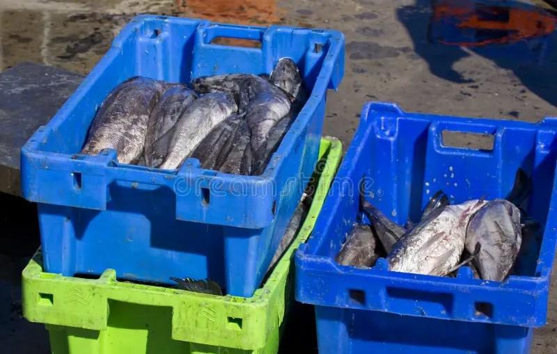 Fresh Fish El Hatillo