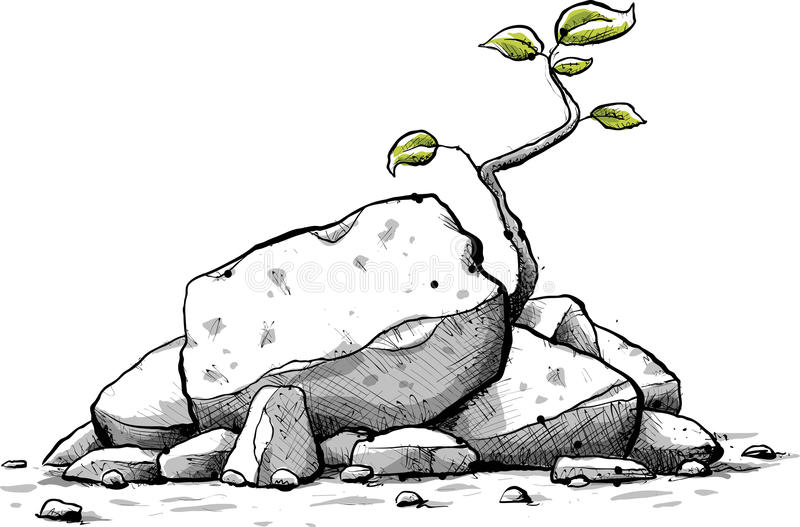 Sapling Stock Illustrations