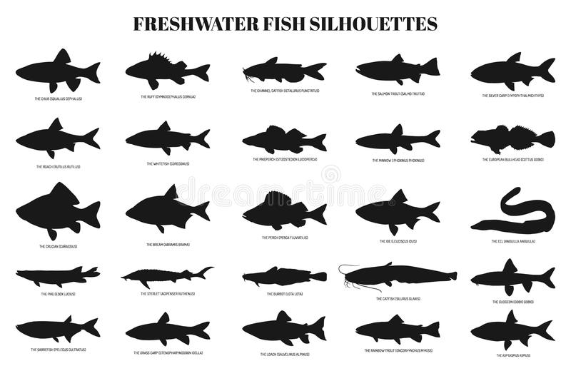 Graphic fish, vector stock vector. Illustration of
