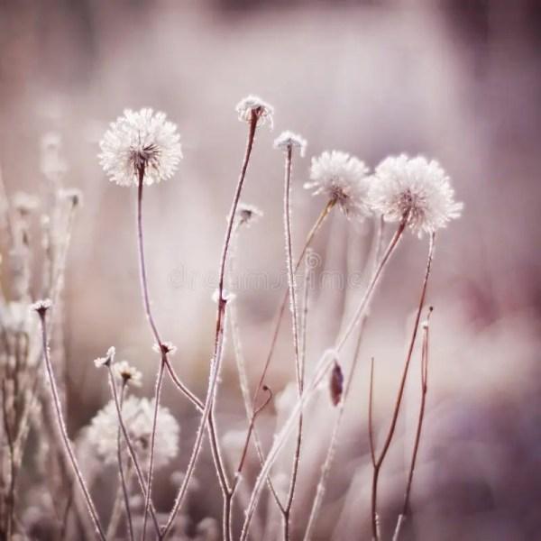 Winter Frozen Flowers