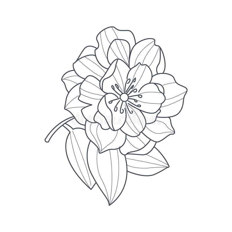 Hand Drawn Vector With Peony Flower Stock Vector