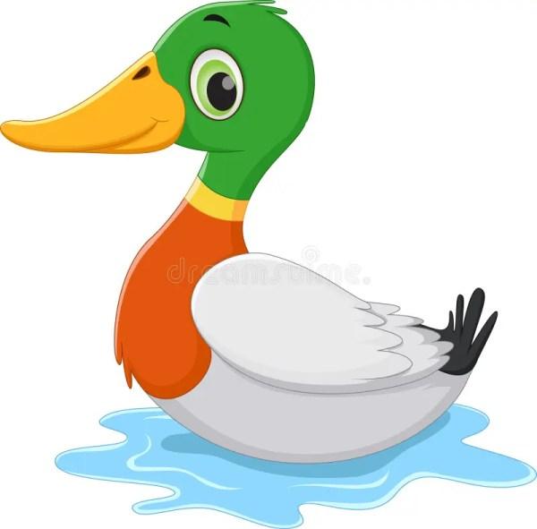 funny cartoon duck swimming stock