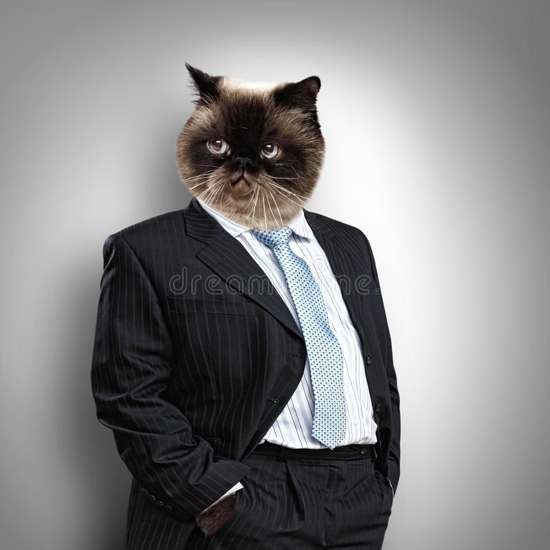 Animal Pak Wallpaper Funny Fluffy Cat In A Business Suit Stock Image Image Of