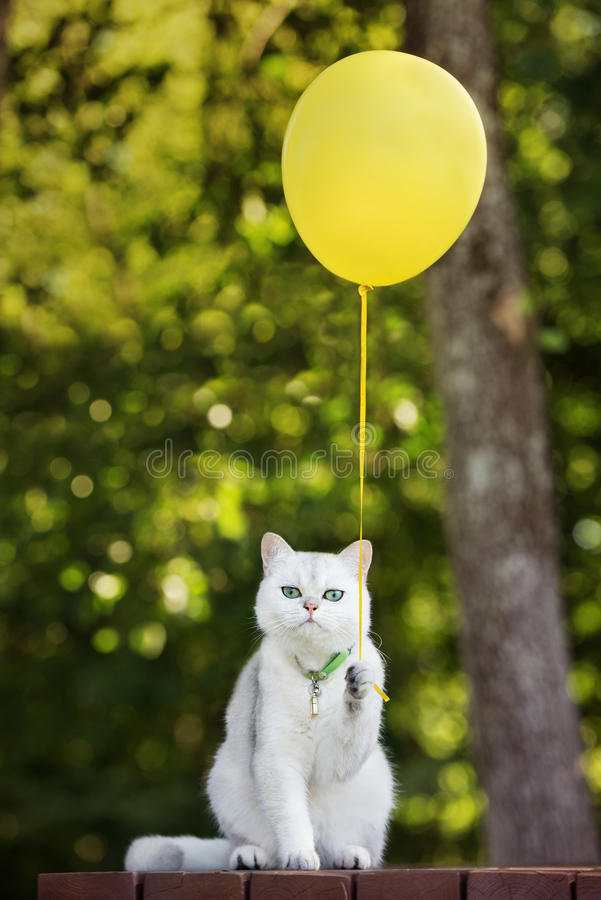 Cute Yellow Cat Wallpapers Funny White Cat Holding A Yellow Balloon Stock Photo