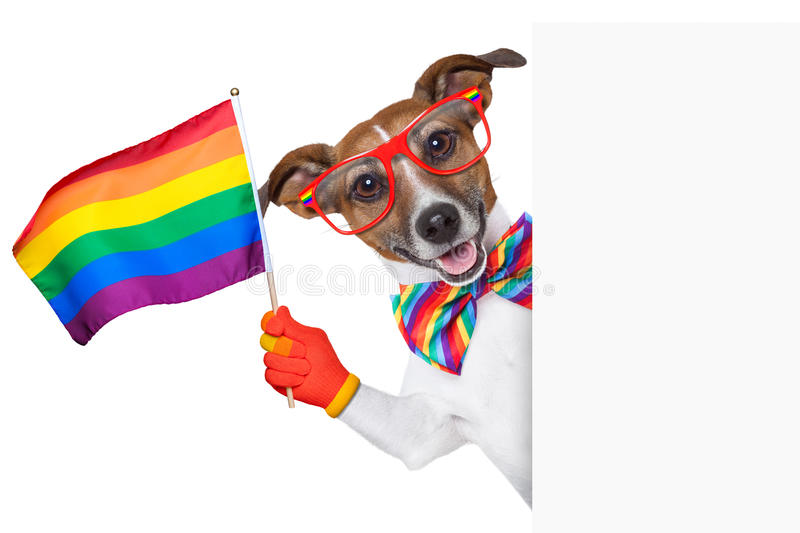 Colorful Animal Print Wallpaper Gay Pride Dog Stock Image Image Of Isolated Board