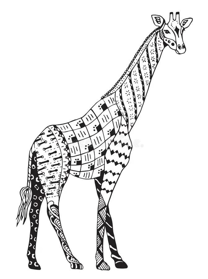 Zentangle Giraffe Stock Vector Illustration Of Decoration