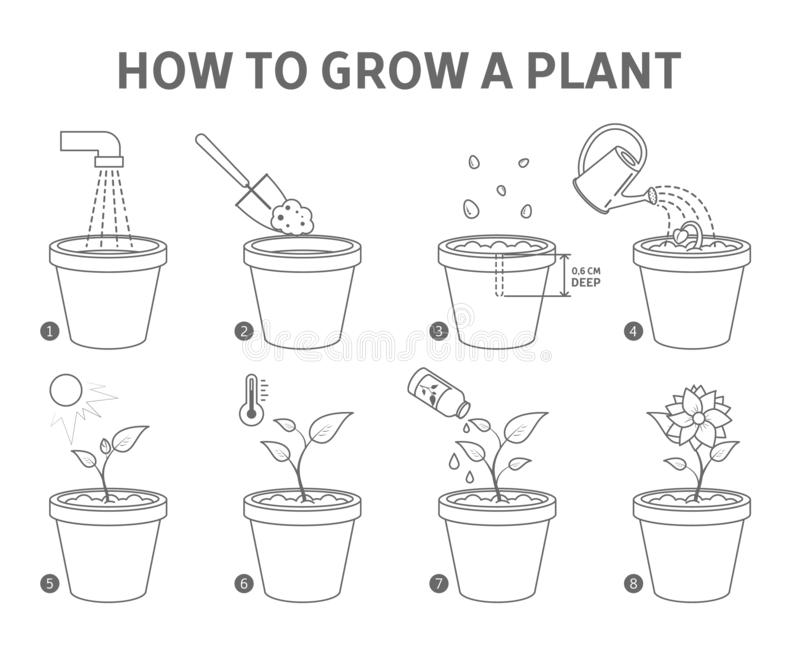 Growing Plant Sequence Stock Illustrations