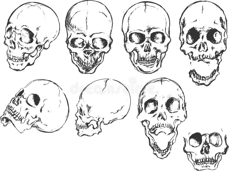 Skull In Different Positions Stock Vector