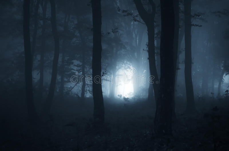 Mystical Fall Desktop Wallpaper Halloween Night In A Mystical Forest Stock Image Image