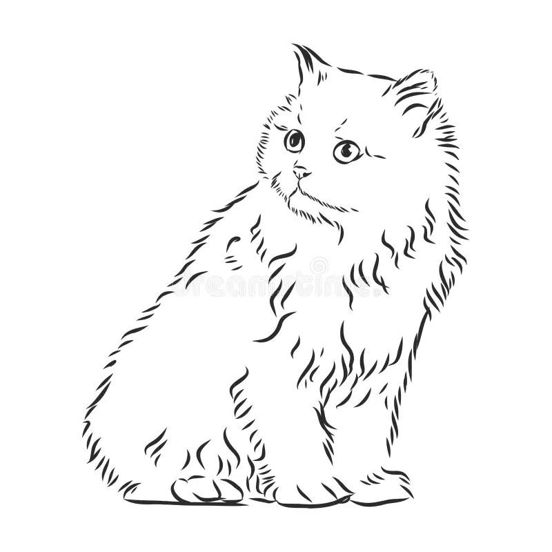 Draw Catposes