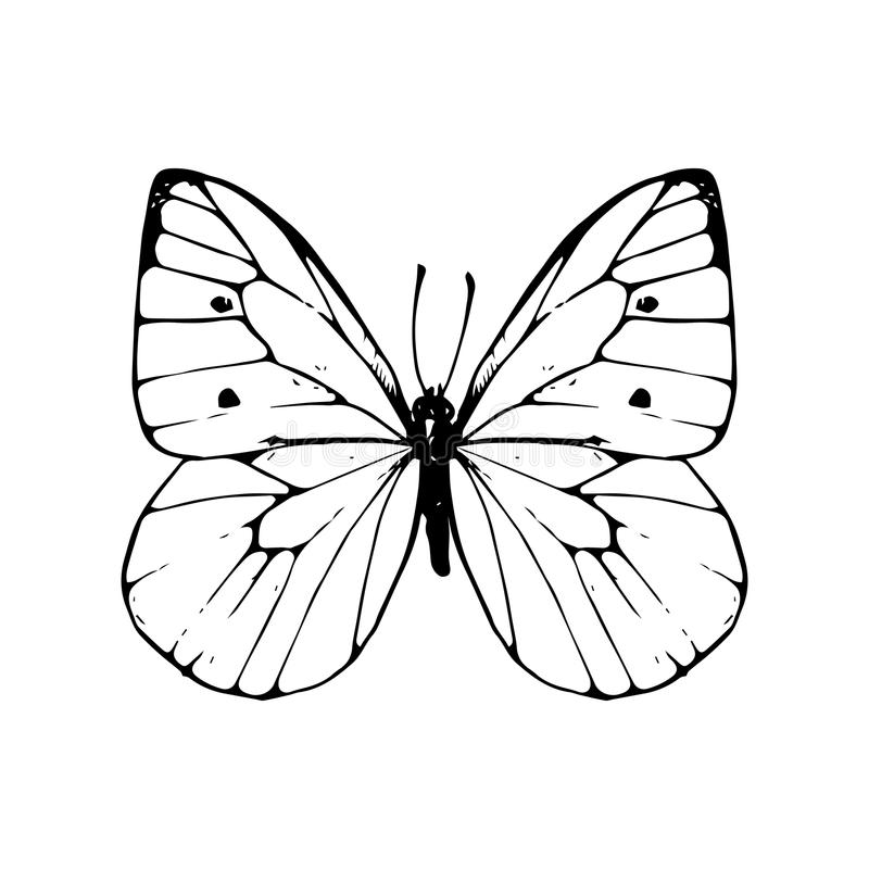 Cabbage Moth Clipart
