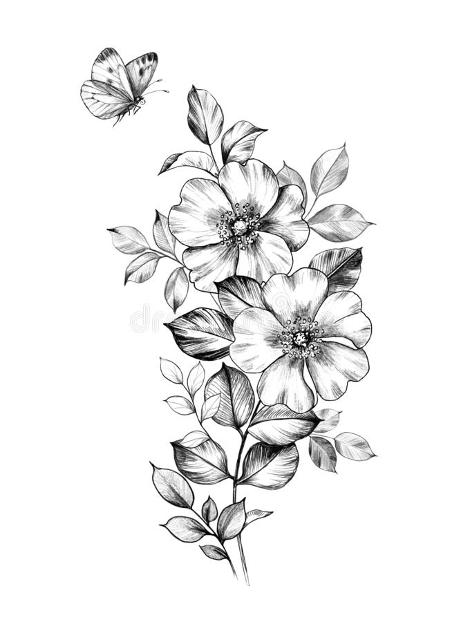 Pencil Drawings Of Flowers And Butterflies : pencil, drawings, flowers, butterflies, Pencil, Drawing, Butterfly, Stock, Illustrations, 2,080, Illustrations,, Vectors, Clipart, Dreamstime