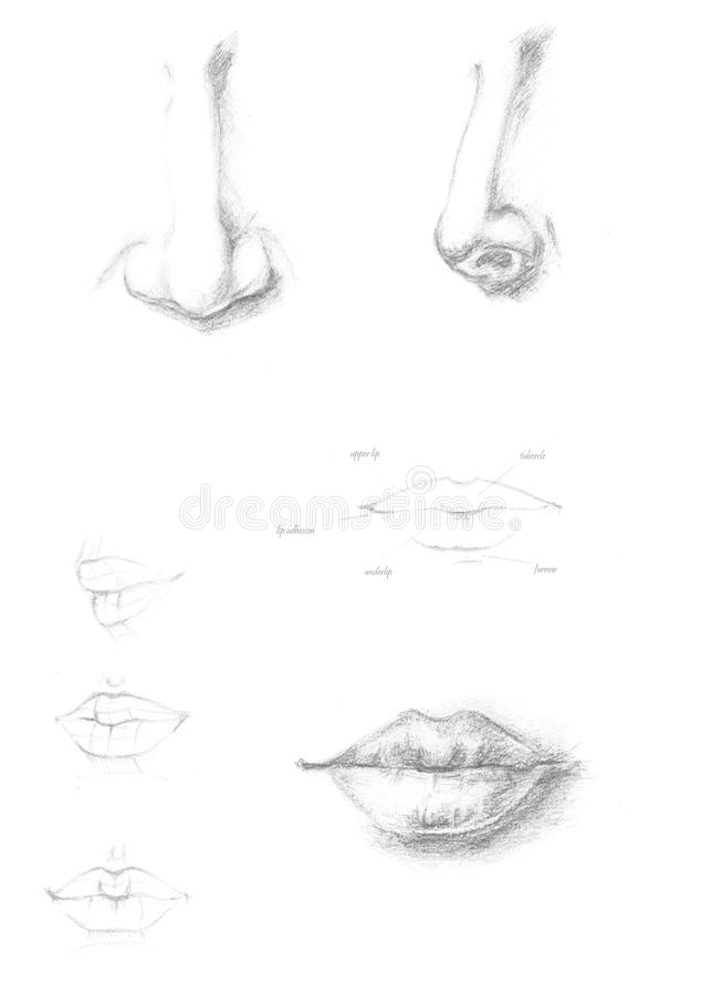 Human Nose Mouth Stock Illustrations